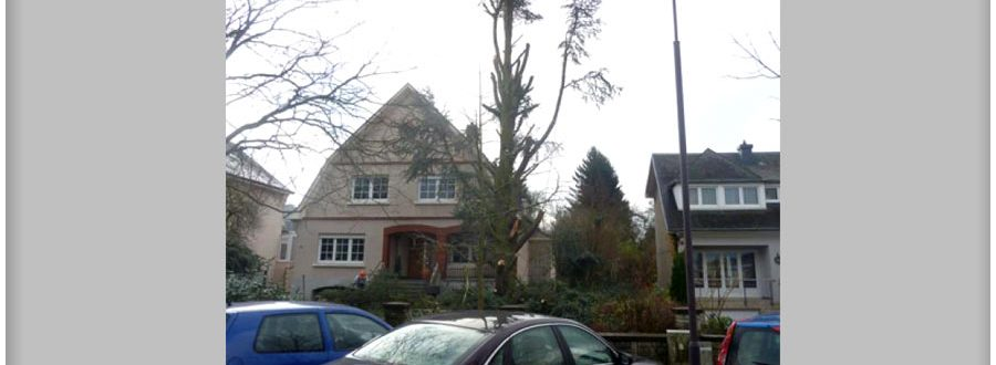 abatage-arbre-luxembourg-paysagiste-jardinier (1)