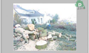 abatage-arbre-luxembourg-paysagiste-jardinier (13)