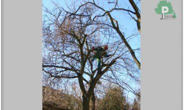 abatage-arbre-luxembourg-paysagiste-jardinier