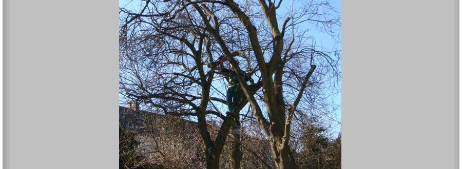 abatage-arbre-luxembourg-paysagiste-jardinier (17)