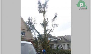 abatage-arbre-luxembourg-paysagiste-jardinier (5)