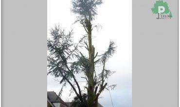 abatage-arbre-luxembourg-paysagiste-jardinier (7)