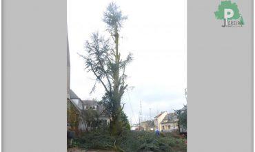 abatage-arbre-luxembourg-paysagiste-jardinier (9)
