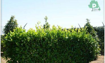 clotures-de-jardin-pose-luxembourg-paysagiste (37)
