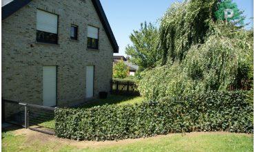 clotures-de-jardin-pose-luxembourg-paysagiste (53)